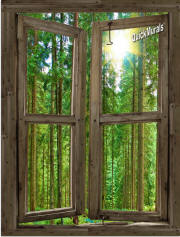 country cabin window